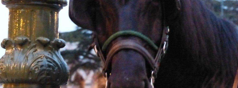 Il cavallo della carrozza in piazza bra con l'arena di verona sullo sfondo
