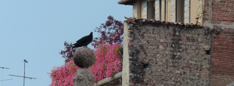 terrazzo-fiorito-casa-mazzanti-verona