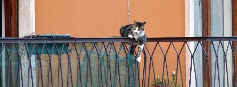 gatto-ringhiera-centro-storico-verona