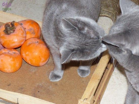 20131128-cachi-gatti-certosini-verona