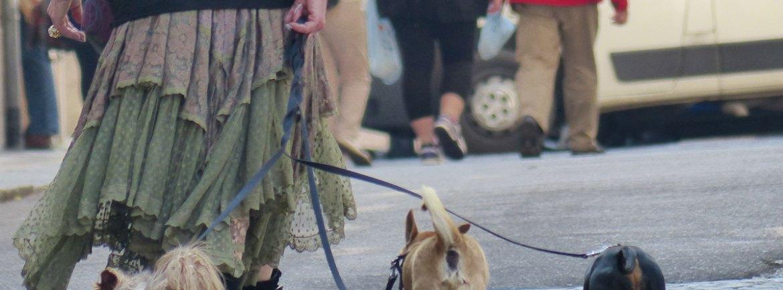 Domenica 22 dicembre 2013, ore 14.30 Ritrovo in Piazza Bra L'associazione di Volontariato Animalista TRIBU' ANIMALE ONLUS invita CANI e UMANI a >>>ZAMPE D'ARTE