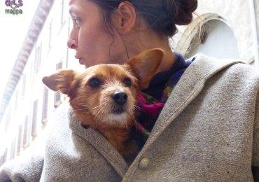 20131228 ida coco cane verona