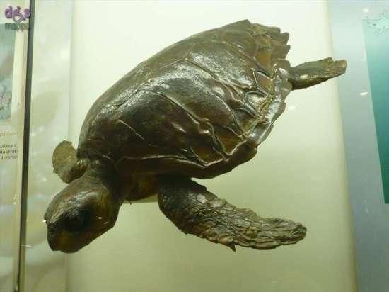20130207 Museo di Storia Naturale Verona accessibile dismappa 736