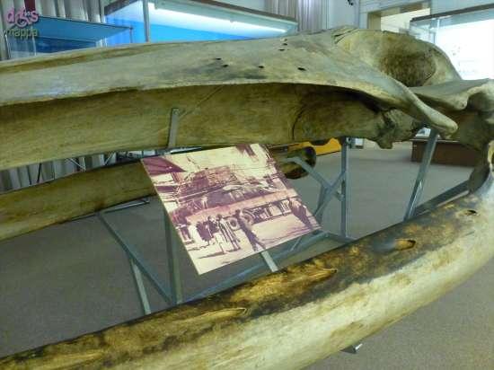 20130207 Museo di Storia Naturale Verona accessibile dismappa 755