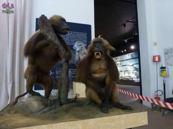 20130207 Museo di Storia Naturale Verona accessibile dismappa 782