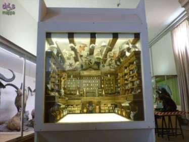 20130207 Museo di Storia Naturale Verona accessibile dismappa 788