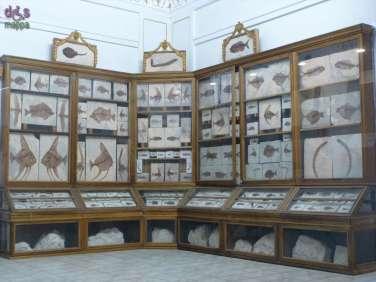 20130207 Museo di Storia Naturale Verona accessibile dismappa 791