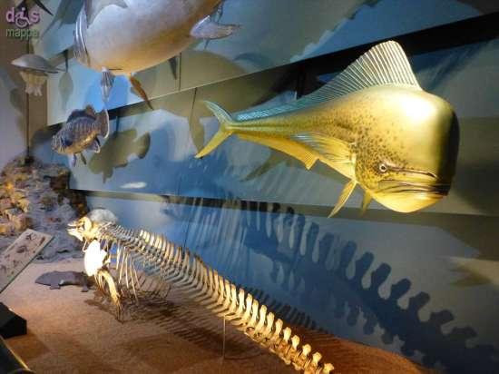 20130207 Museo di Storia Naturale Verona accessibile dismappa 809