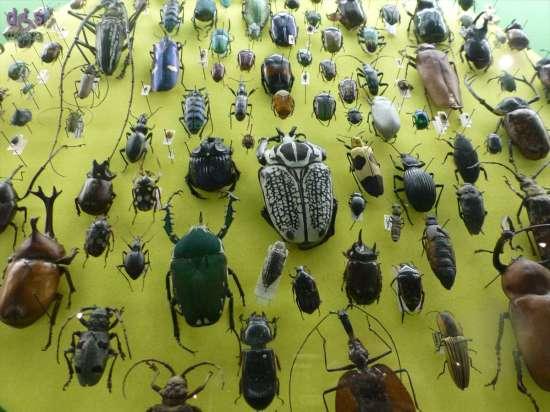 20130207 Museo di Storia Naturale Verona accessibile dismappa 877
