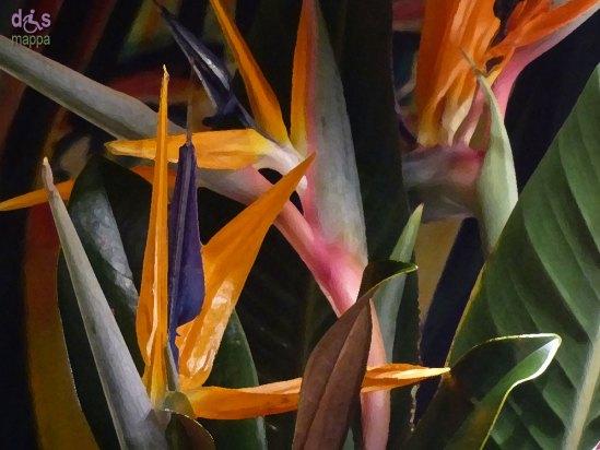 20140201 Strelitzia pianta uccello del paradiso drypaint