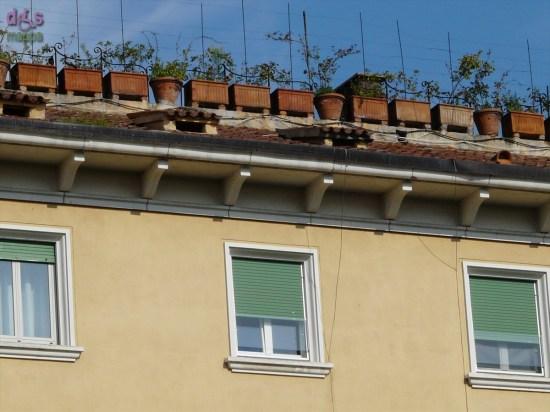 20090927 vasi fiori tetto piazza san nicolo verona 44