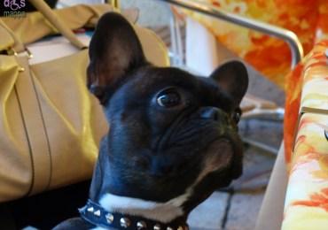 20140320 Gany bulldog francese via Stella Verona