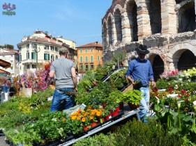 20140329 Verona in fiore Piazza Bra 70