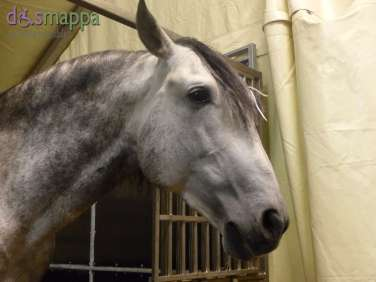 20150625 Cavalli White teatro equestre dismappa 696