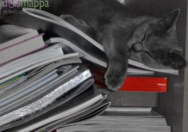 20151101-gatta-certosina-dorme-tra-libri-Verona-dismappa