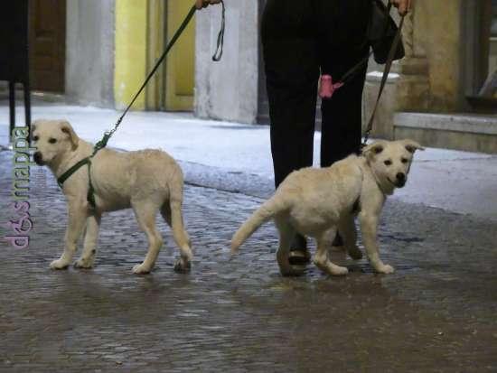 20170616 coppia cani Verona dismappa