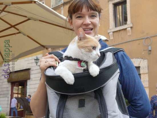 20170617 Gatto turista Verona dismappa 1237