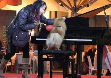 20170214_ Cane pianista turista Verona dismappa 009