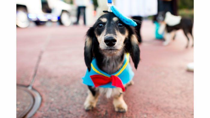 4 Walt Disney World Resorts Where Your Dogs Can Stay With You