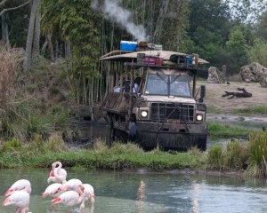 Disney World tips and tricks: Sit in the back of the vehicle for the Safari Ride at Animal Kingdom