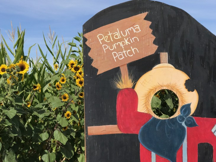 PumpKin Patches and Corn Mazes of Sonoma County