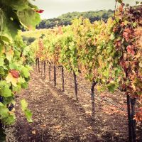 Things To Do In Northern California The Groupon Way #GrouponCoupons #ad