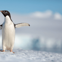 Here's Your First Look At Disneynature's Penguins! Waddling Into Theaters Earth Day 2019