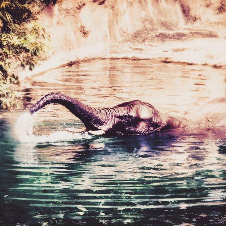 Disney's Animal Kingdom Walt Disney World Disney Conservation Fund