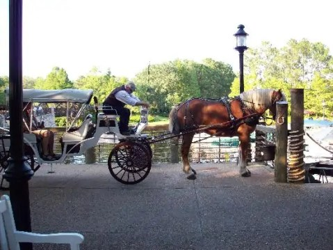 horse-and-carriage-rides