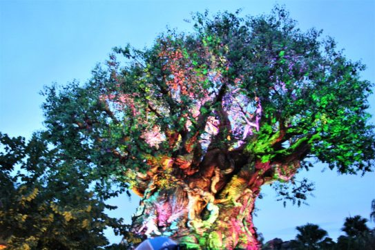 Animal Kingdom Itinerary - Disney in your Day