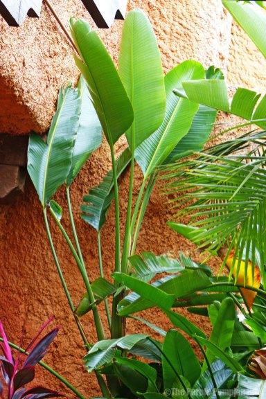 Flowers, Plants & Trees around Epcot
