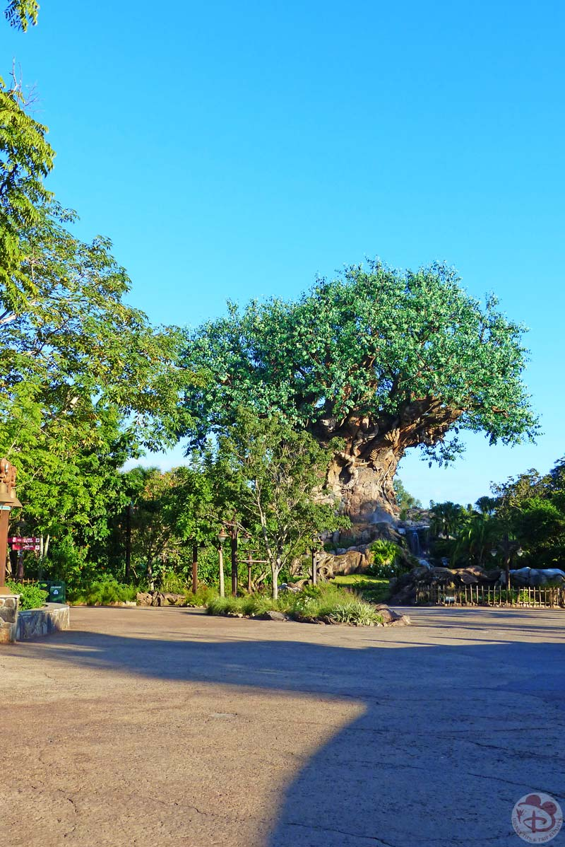 Disney's Animal Kingdom - Tree of Life