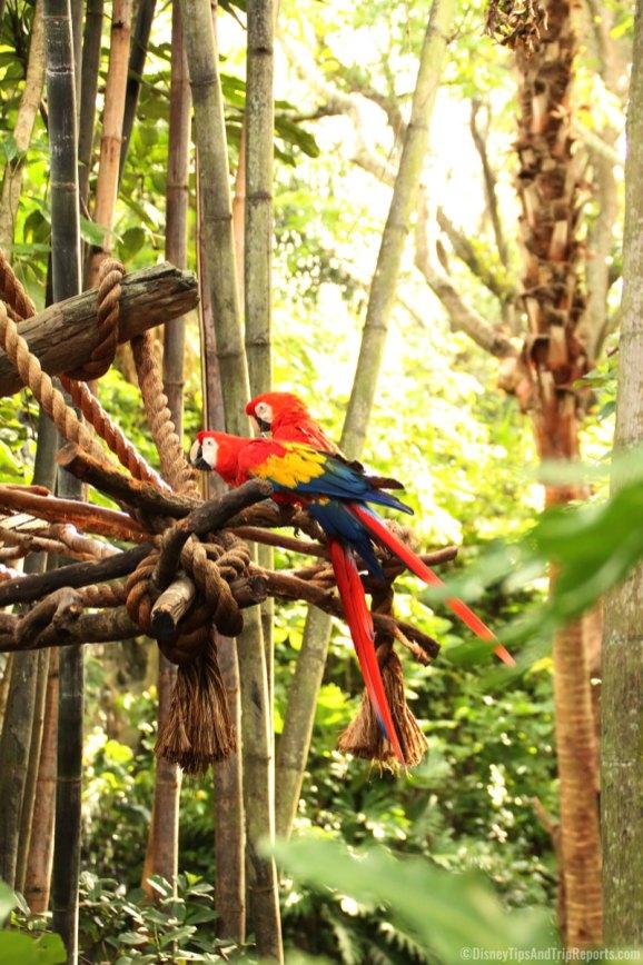 Macaws at Animal Kingdom