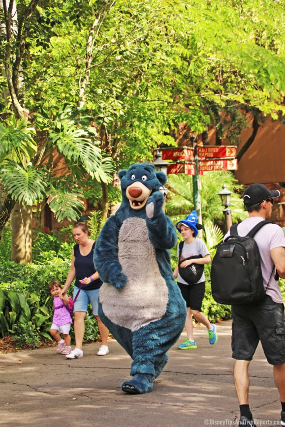 Animal Kingdom - Baloo