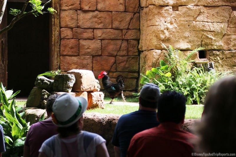 Animal Kingdom - Flights of Wonder