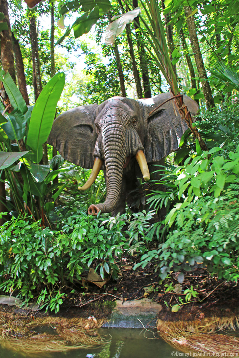 Magic Kingdom - Jungle Cruise