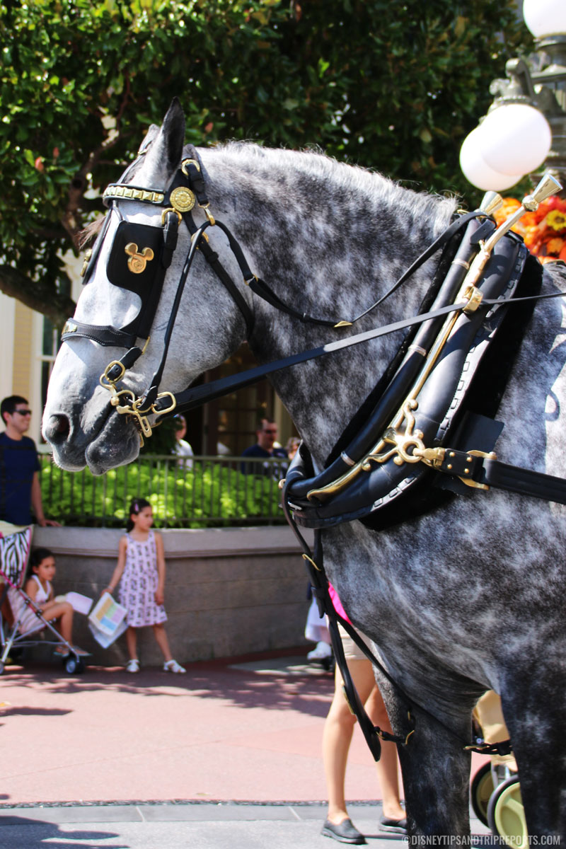 Magic Kingdom - Horse & Carriage