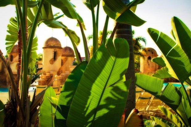 caribbean-beach-resort-plants