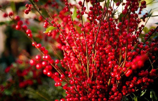 disneyland-christmas-2013-073
