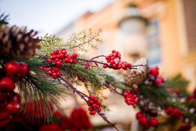 disneyland-christmas-2013-078