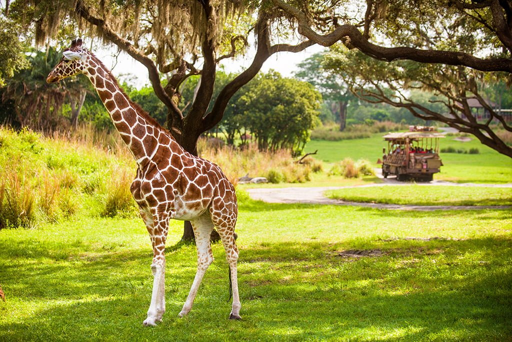 1-Day Disney's Animal Kingdom Park Itinerary - Disney
