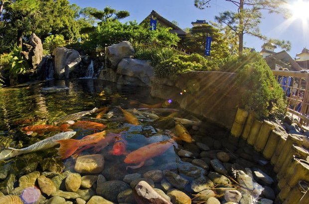 japan-koi-pond-epcot-disney-sun-flare