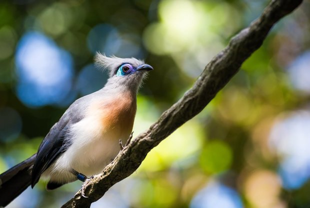 animal-kingdom-bird-disney-world-telephoto