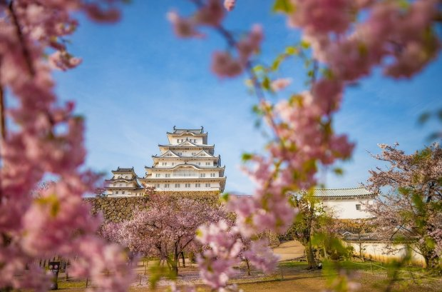 himeji-castle-shallow-dof-sigma-20mm-lens-cherry-blossom