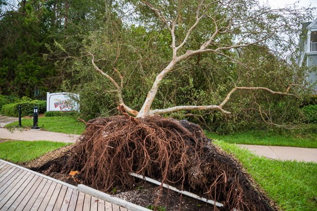 Hurricane Dorian Disney World Closures & Impacts: Should You