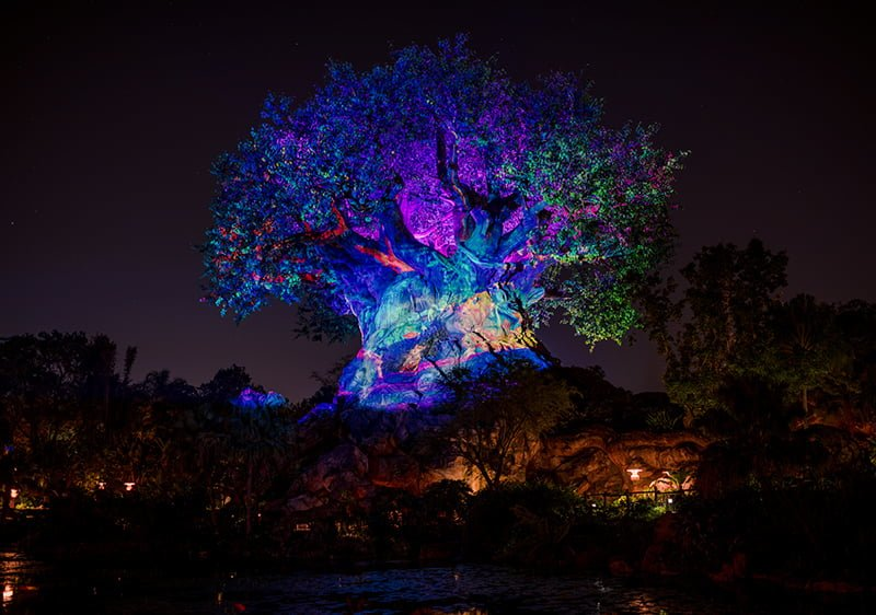 Animal Kingdom After Hours Review & Info - Disney Tourist Blog