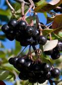 photo_article_plantes-défenses-immunitaires_10
