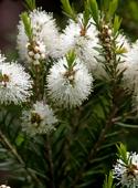 photo_article_plantes-défenses-immunitaires_5