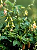 photo_article_plantes-défenses-immunitaires_7