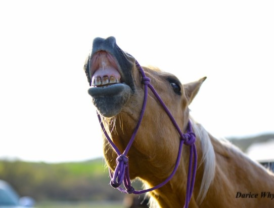 How not to electrolyte your horse